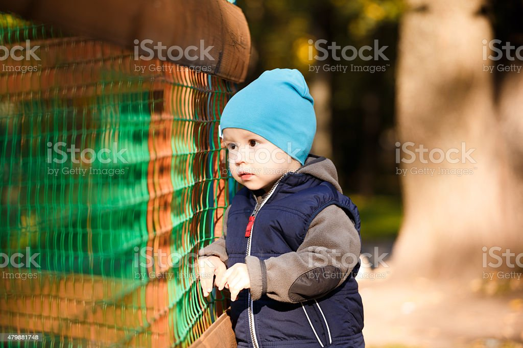little boy in the autumn stock photo
