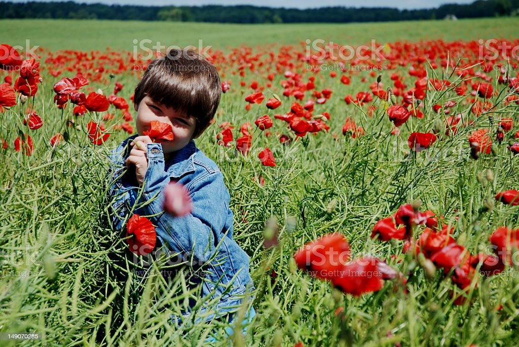 Little boy in the poppies field royalty-free stock photo