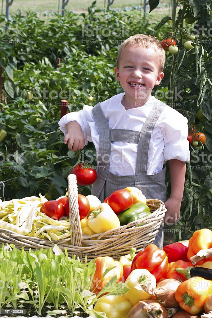 Little boy in the vegetable garden royalty-free stock photo