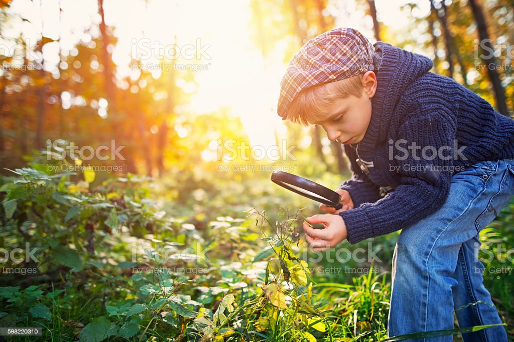 Little boy observing seeds of touch-me-not plant stock photo