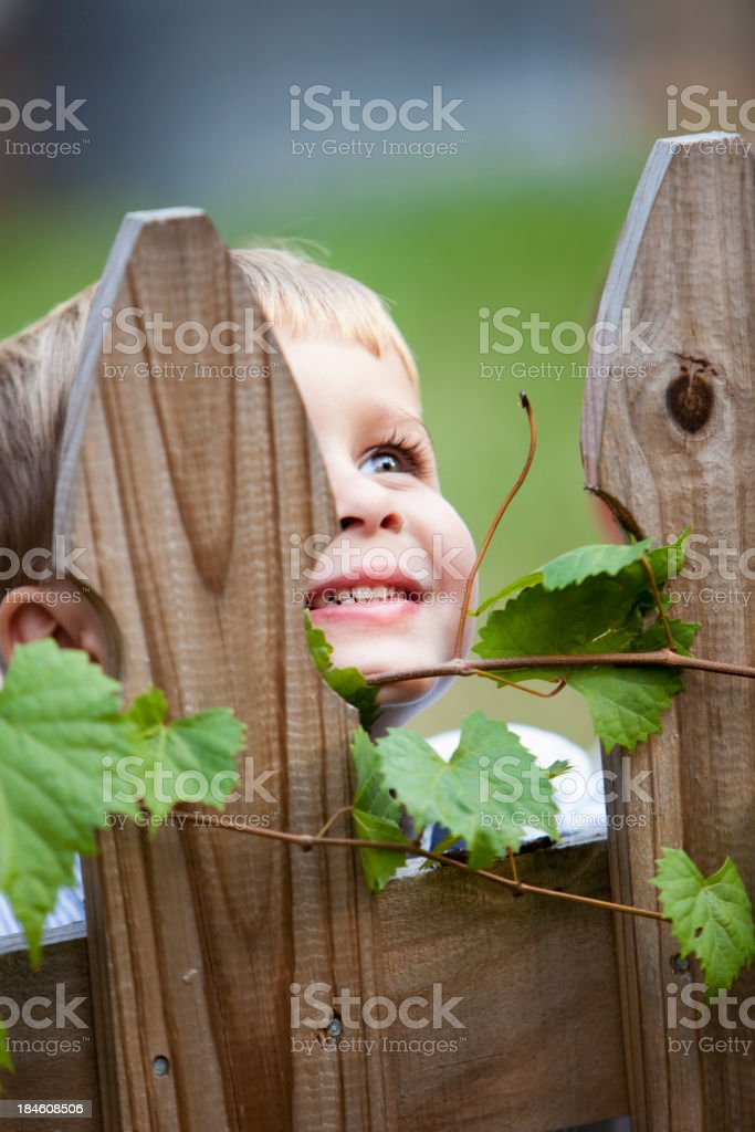 Little boy peeking through picket fence stock photo