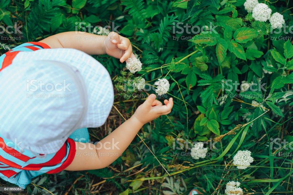 Little boy picking a flower stock photo
