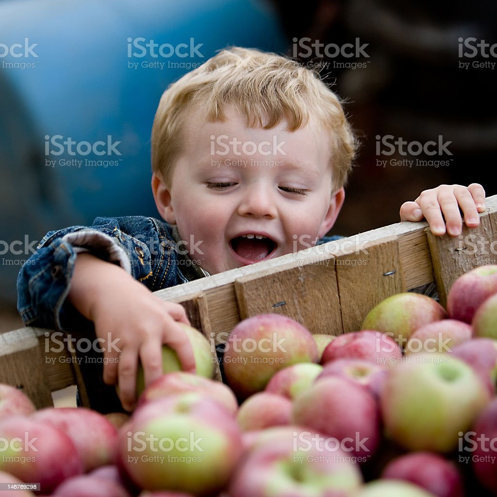 Little Boy picking apples stock photo