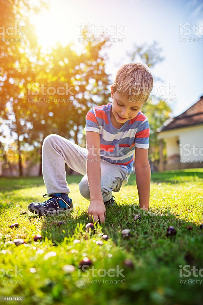 Little boy picking up conkers in the city park stock photo