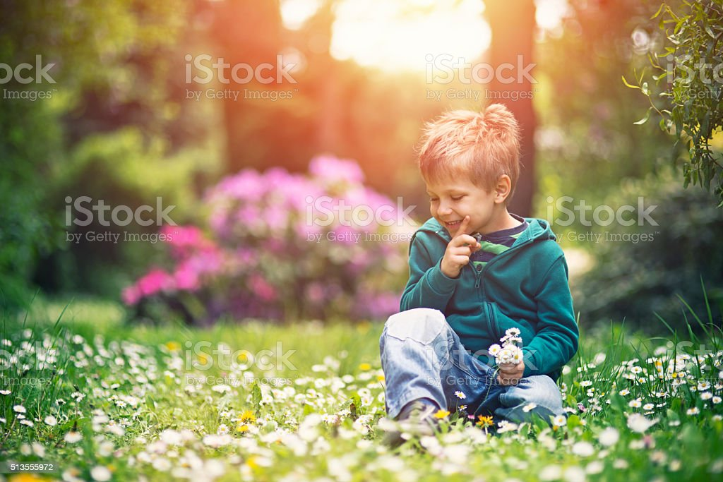 Little boy picking up daisy flowers for mother's day stock photo