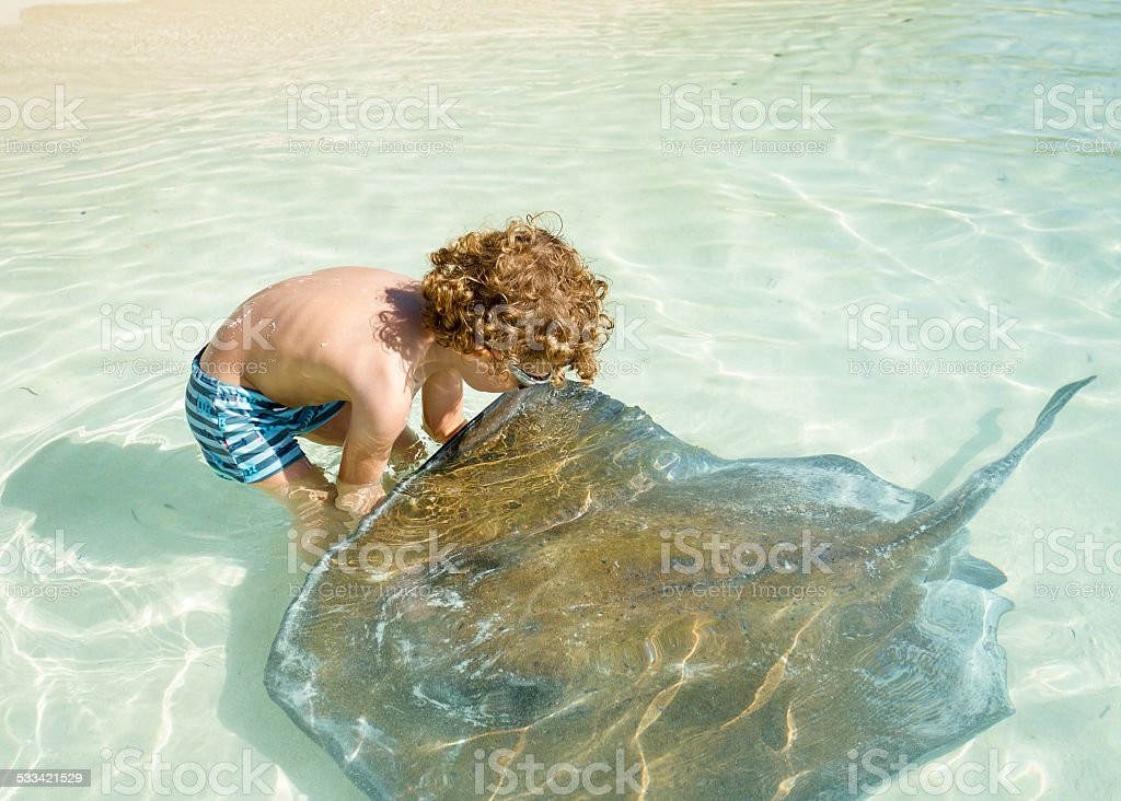 Little boy playing with stingray stock photo