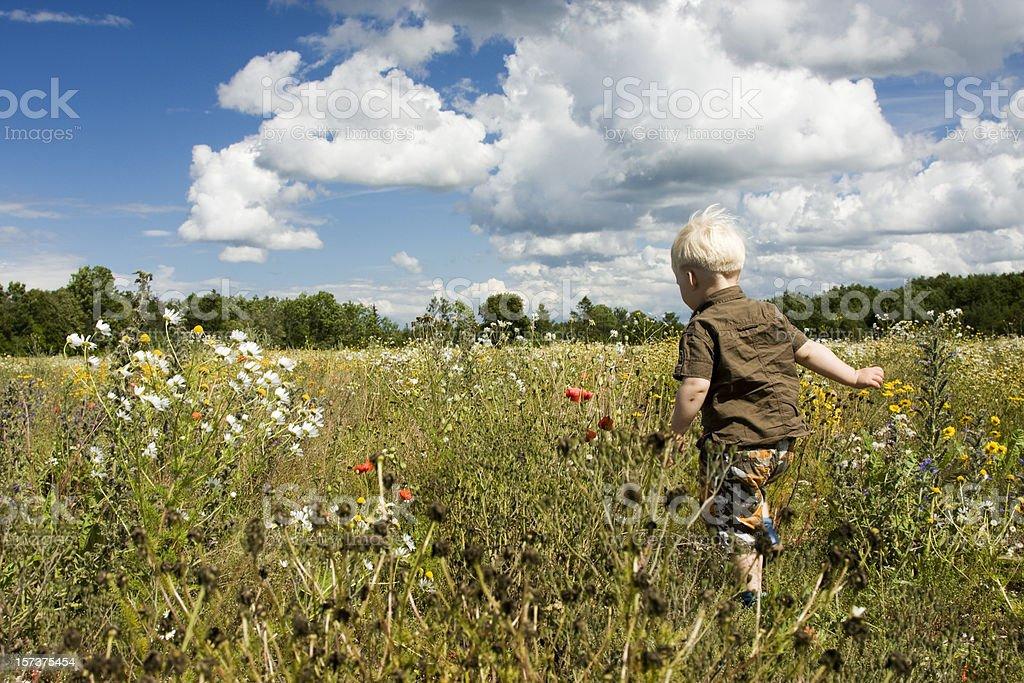 Little Boy walking in the field royalty-free stock photo