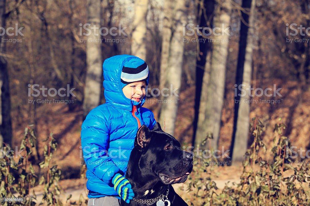 little boy walking with big dog stock photo