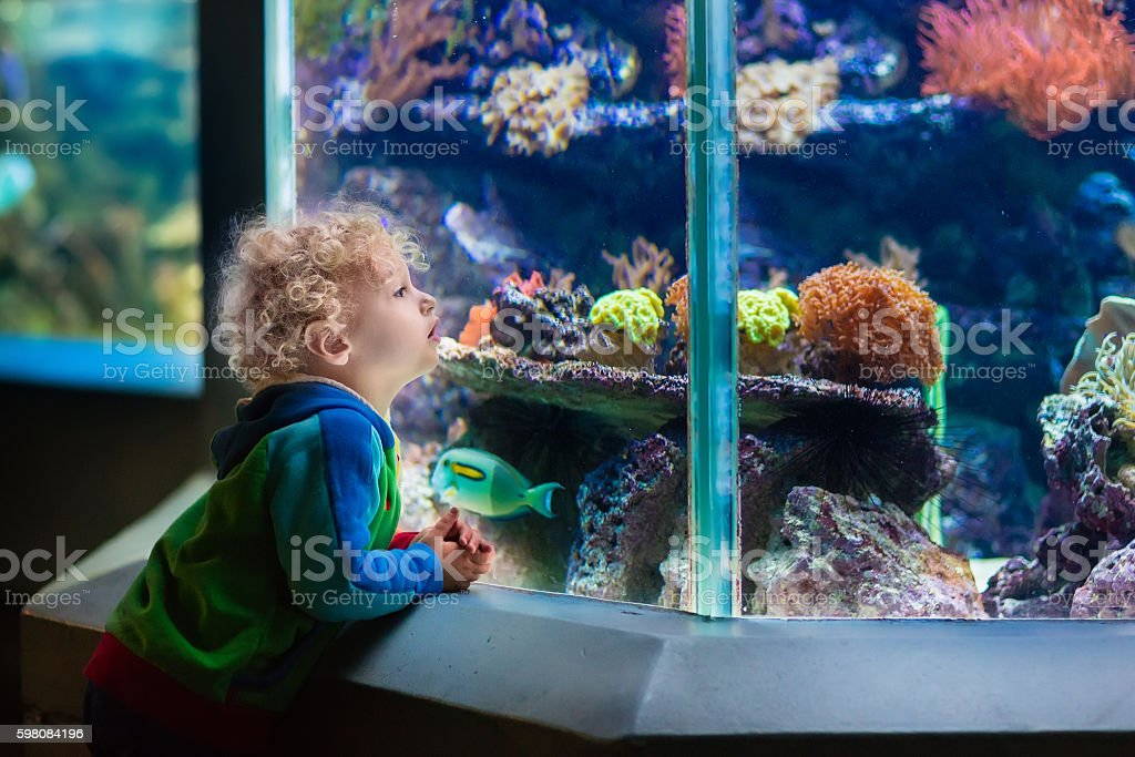 Little boy watching tropical aquarium with coral fish stock photo