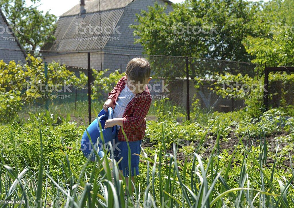 Little boy watering garden plants royalty-free stock photo