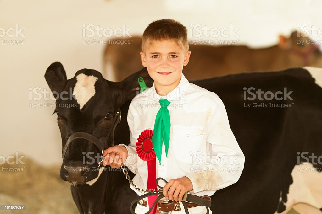 Little boy with a red ribbon showing a cow at a country fair royalty-free stock photo