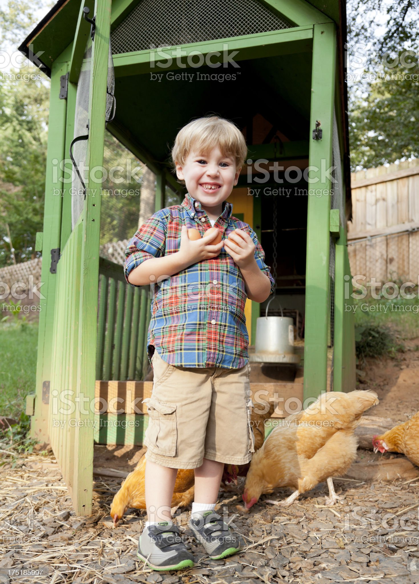 Little Boy with Backyard Chickens royalty-free stock photo