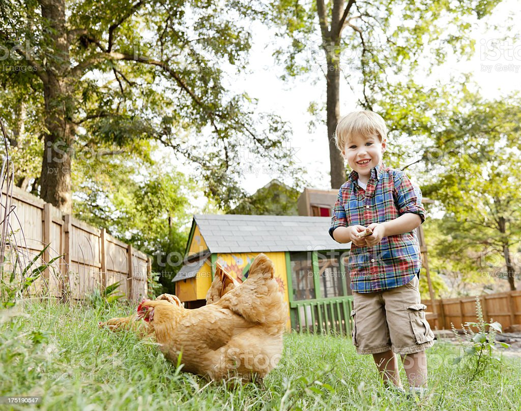 Little Boy with Backyard Chickens stock photo