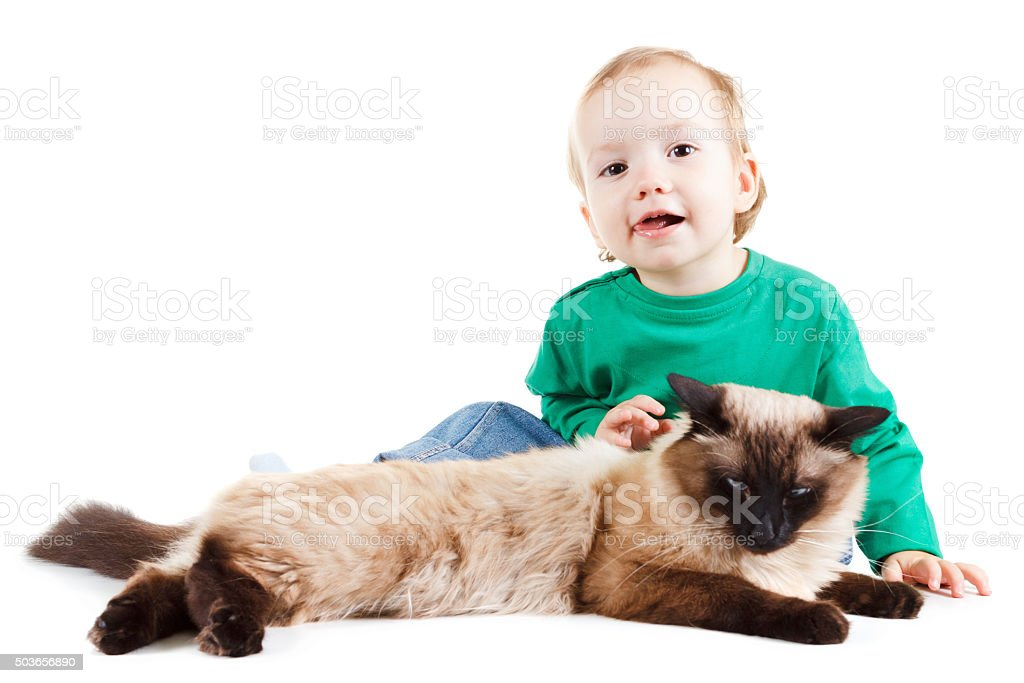 little boy with balinese cat isolated on white stock photo