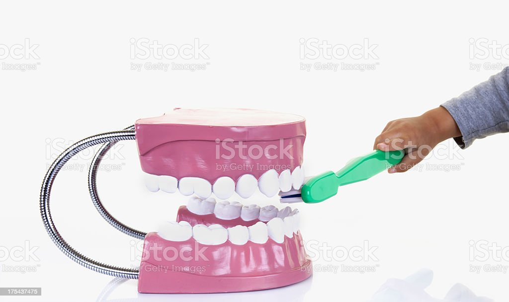little boy with Dentist's sample teeth royalty-free stock photo