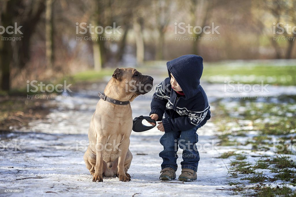 Little boy with his dog in a park stock photo