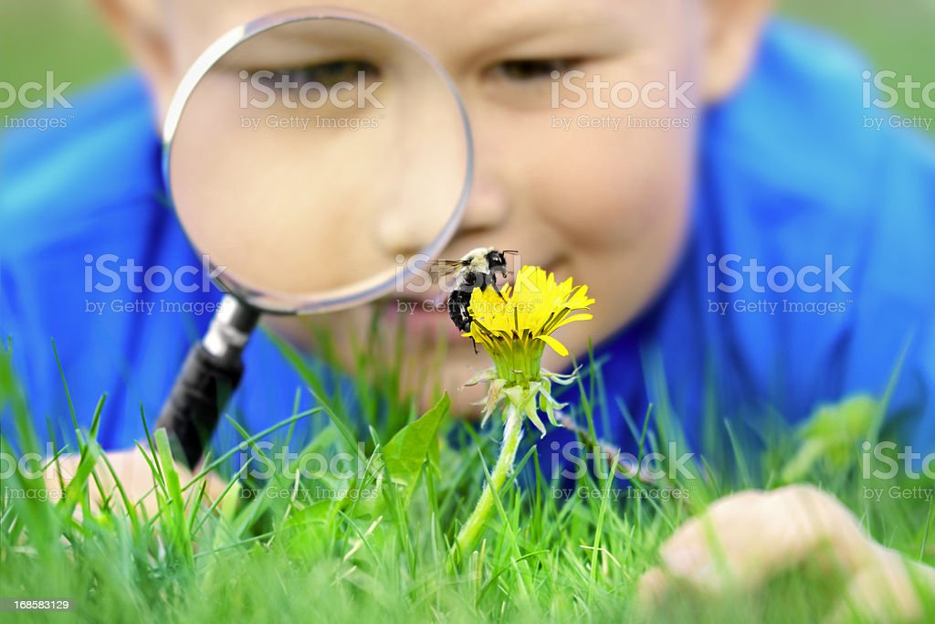 Little boy with magnifying glass and bee stock photo