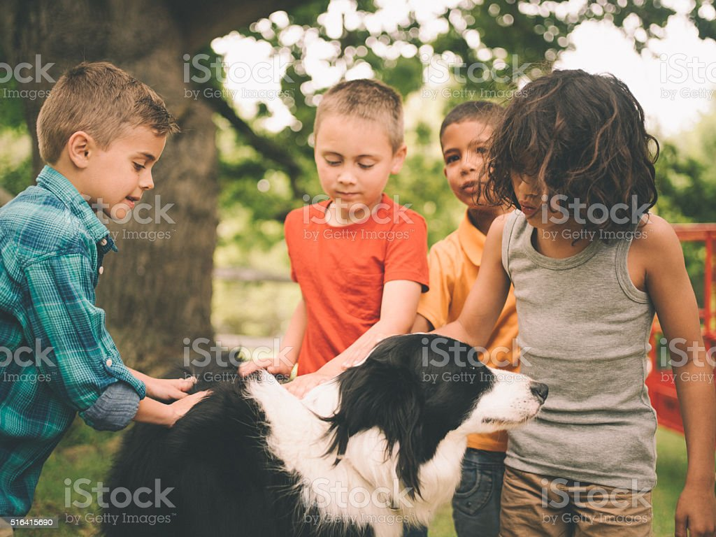 Little boys playing with a Border Collie dog in park stock photo