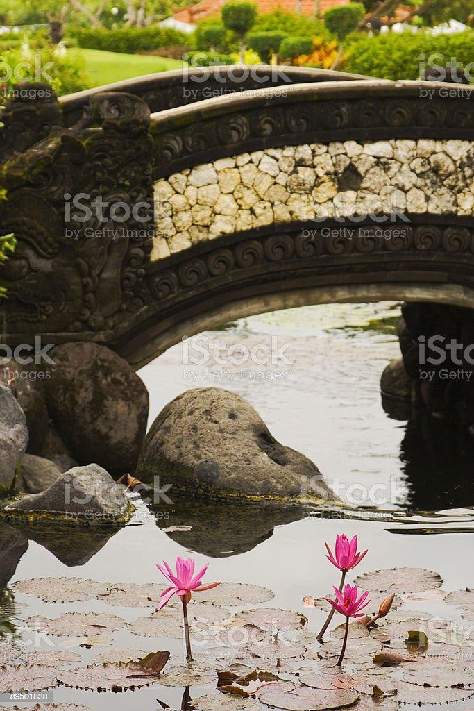 Little bridge and lotuses royalty-free stock photo