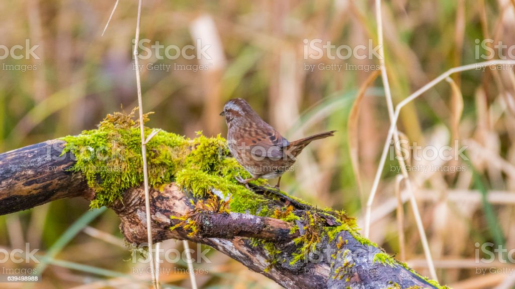Little brown bird among tree branches stock photo