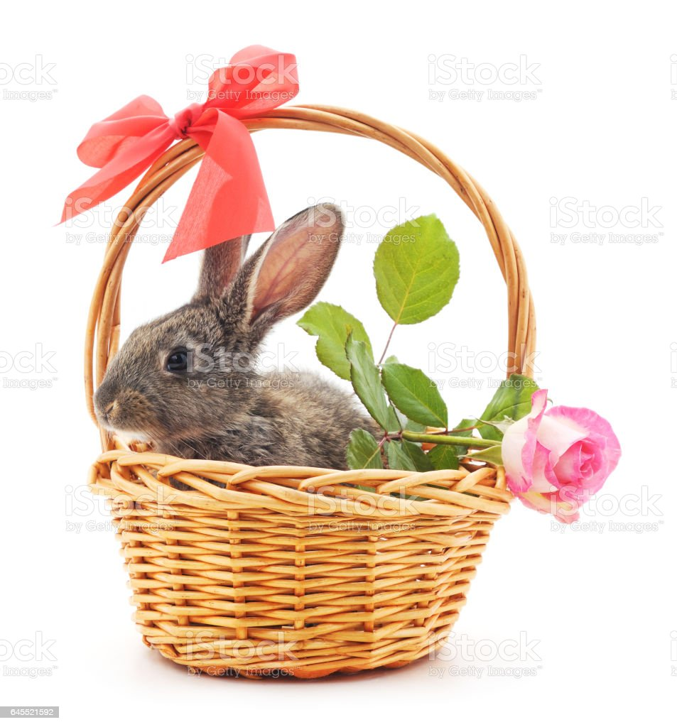Little bunny in a basket. stock photo