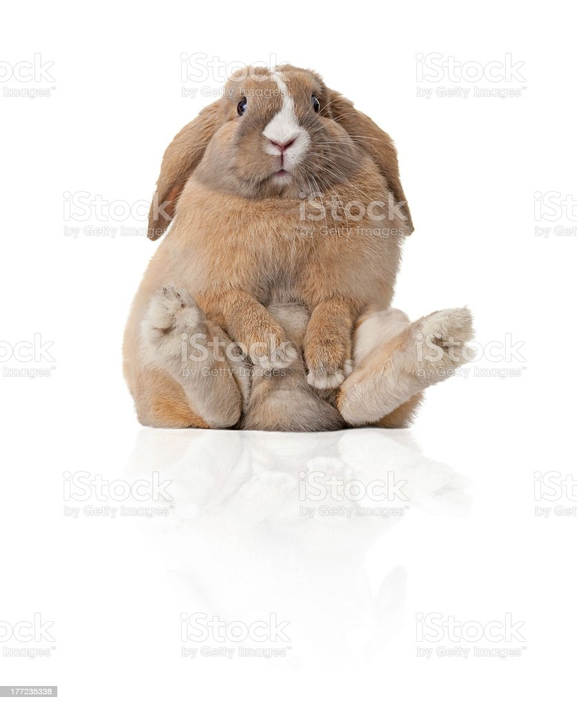little bunny sitting stock photo