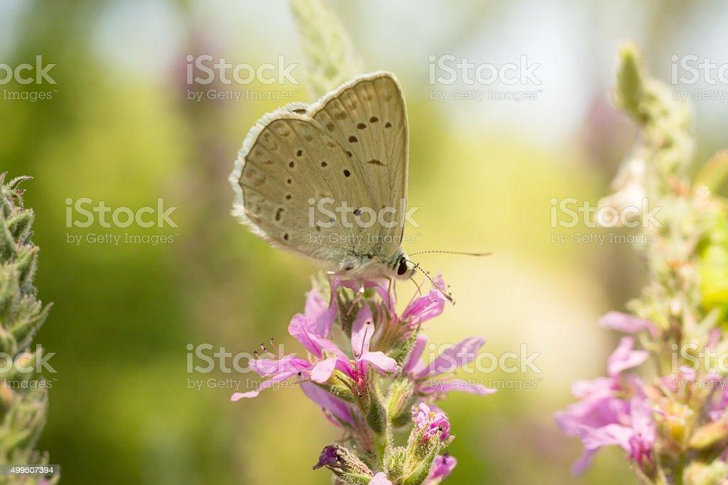 Little Butterfly stock photo