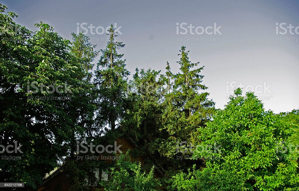 little cabin in the woods royalty-free stock photo