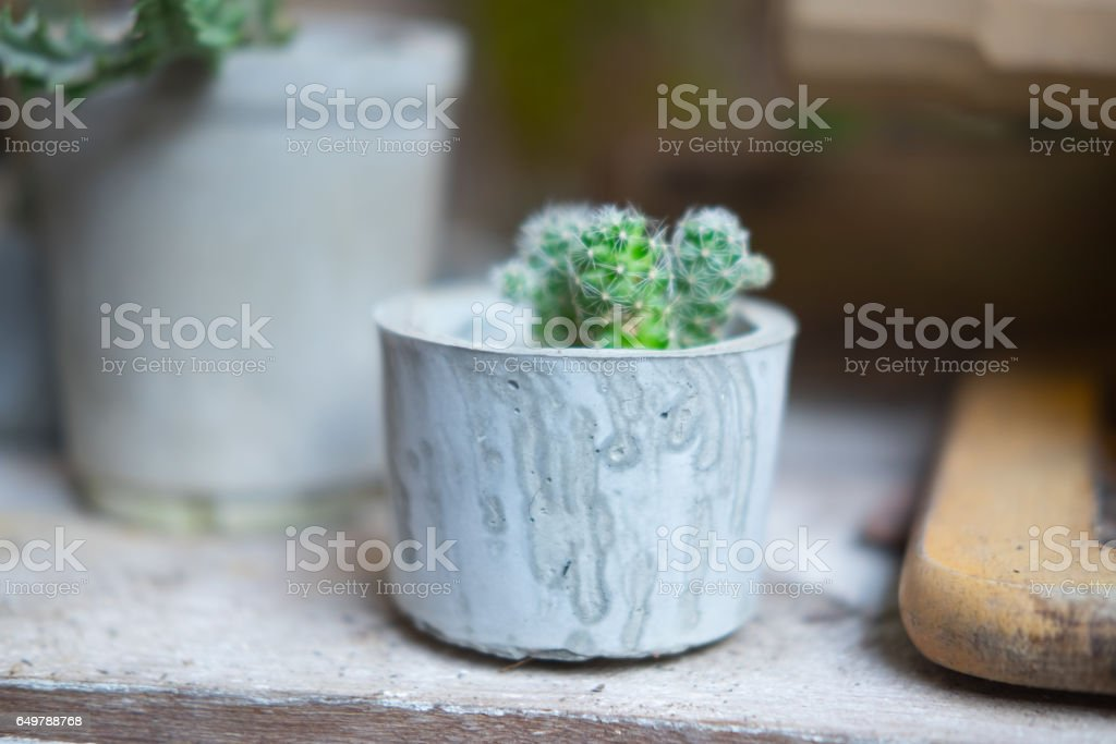 Little cactus plant in the  pot decoration in home stock photo