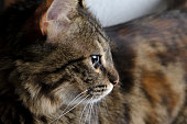 Little Cat Looking