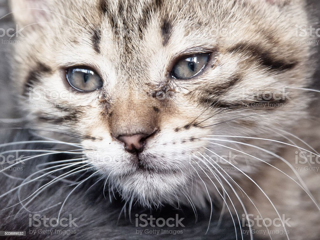 little cat stock photo