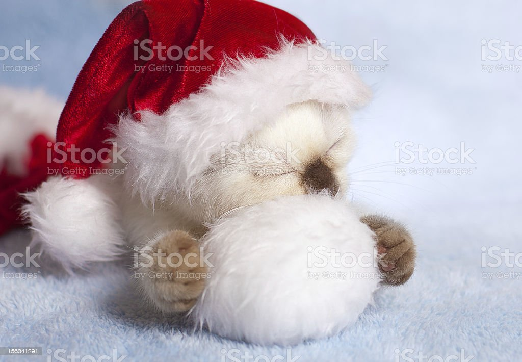 Little cat wearing Santa's hat royalty-free stock photo