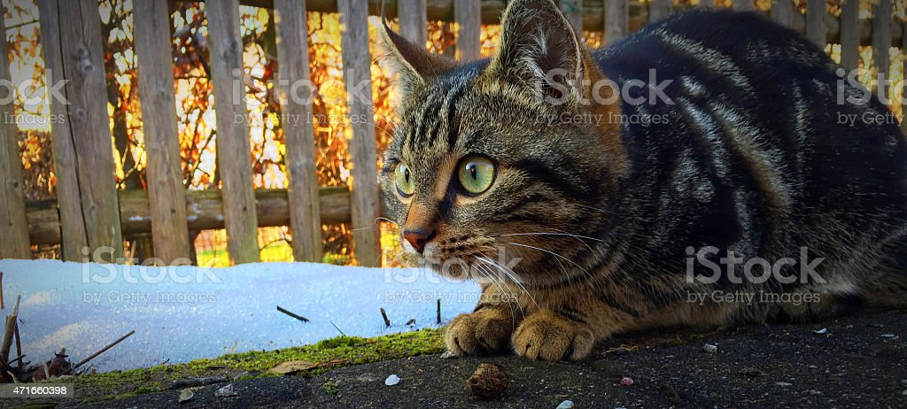 little cat with big green eyes stock photo