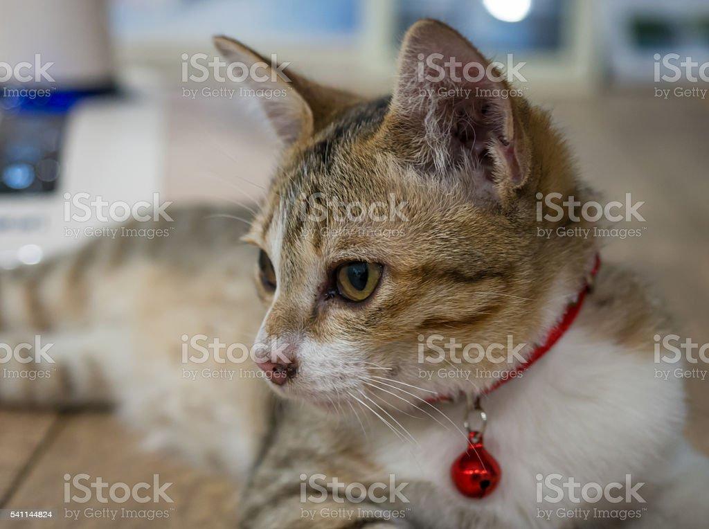 little cat-2 stock photo
