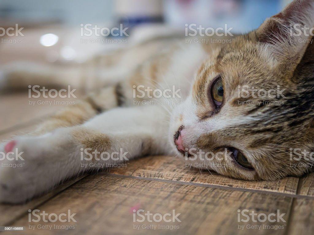 little cat-3 stock photo