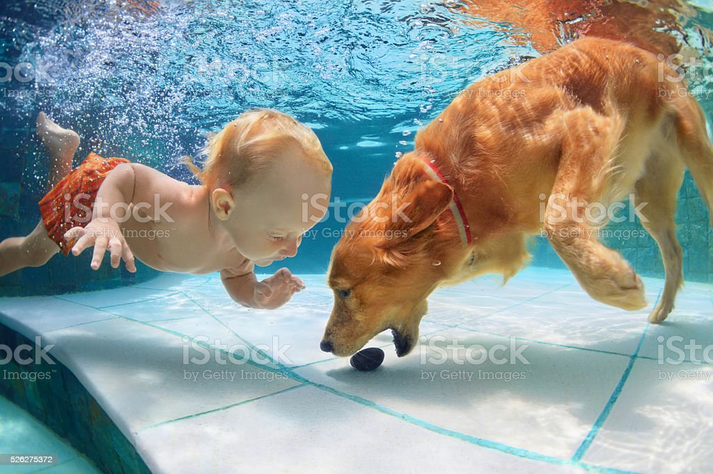 Little child swim underwater and play with dog stock photo