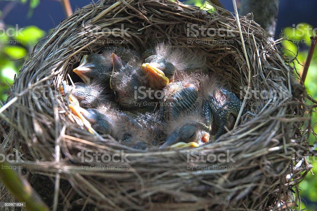 Little children Birds 2 stock photo