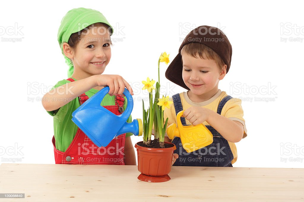 Little children caring for potted narcissus royalty-free stock photo