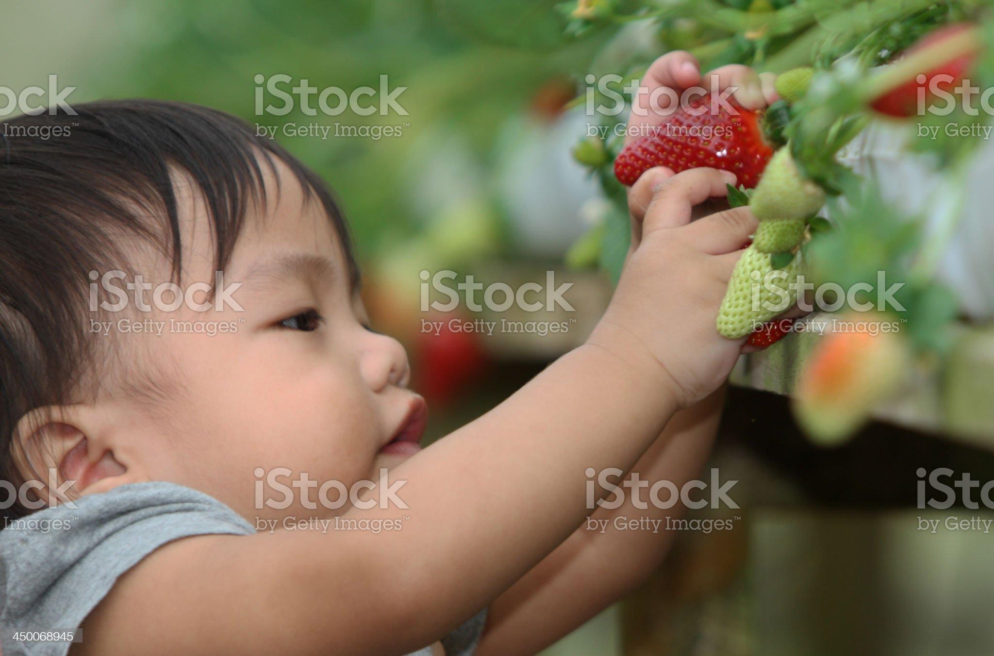 little children pick strawberries royalty-free stock photo