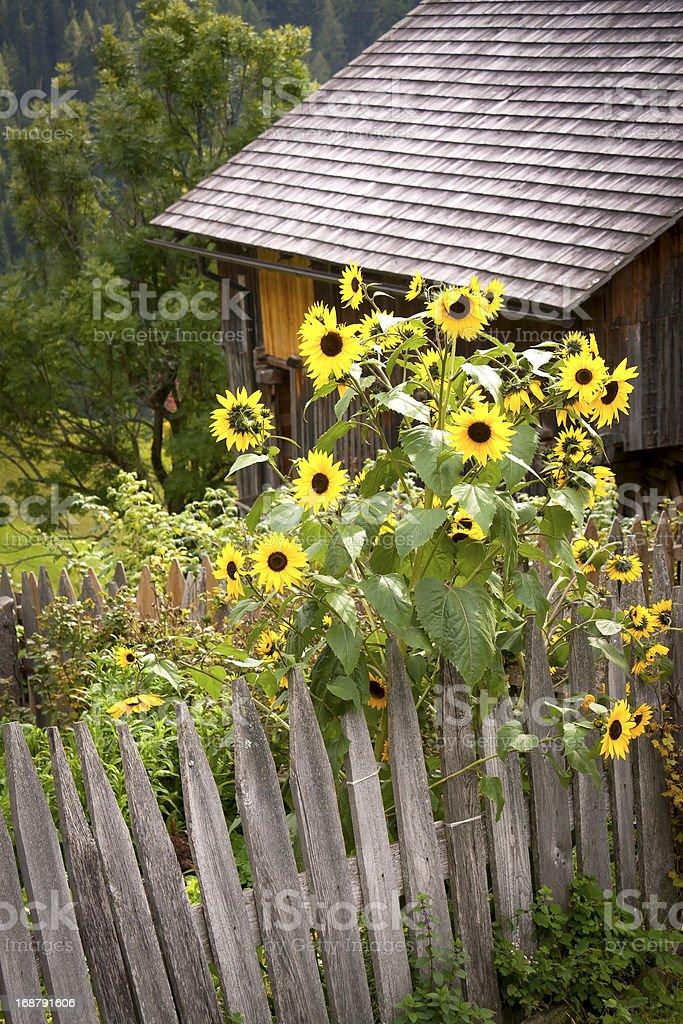 Little cottage garden stock photo