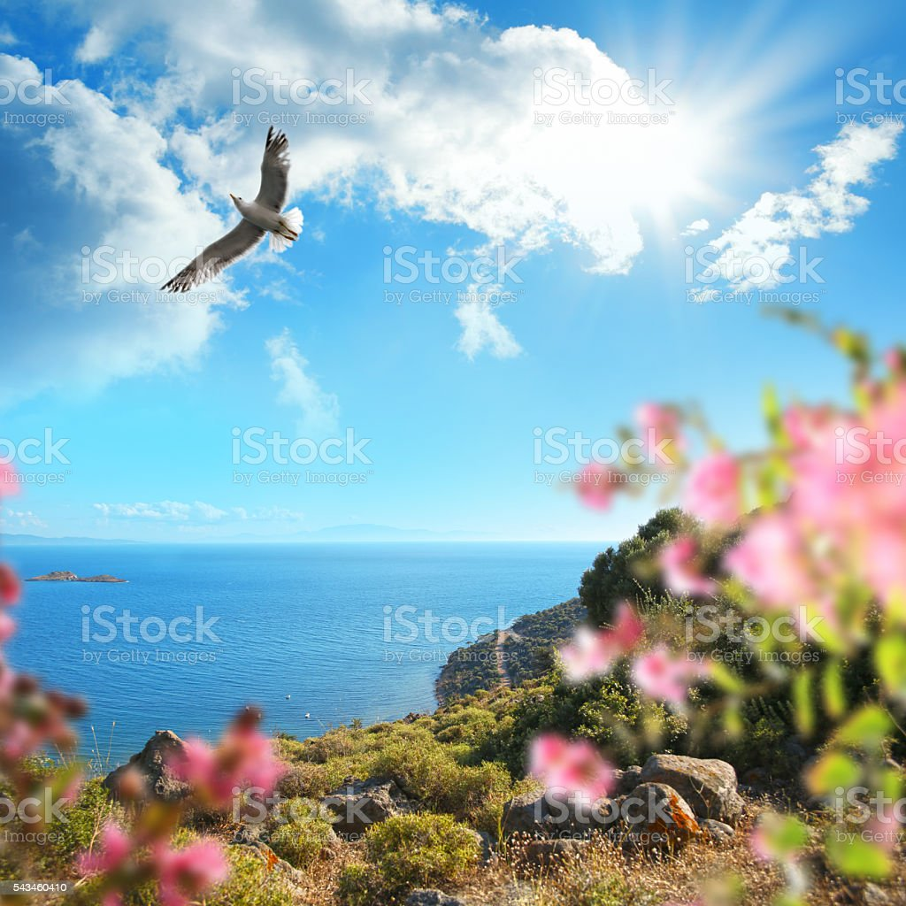 Little cove and flying seagull over sunny sky stock photo