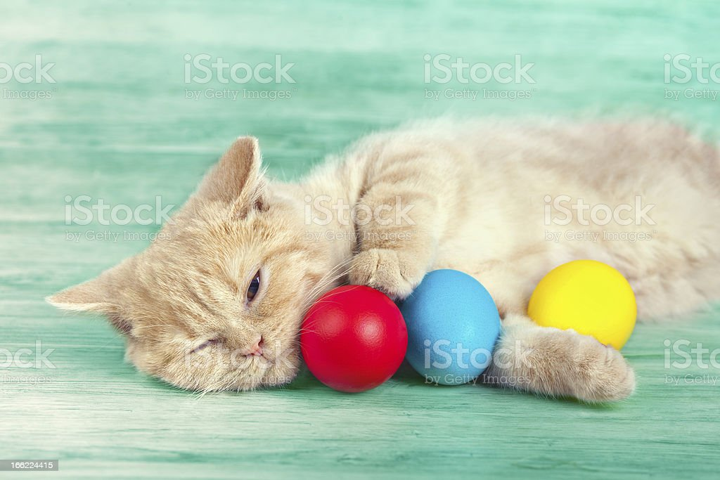 Little cream cat sleeping near the colored eggs royalty-free stock photo
