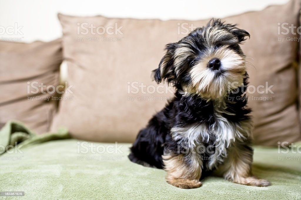 Little Curious Puppy stock photo