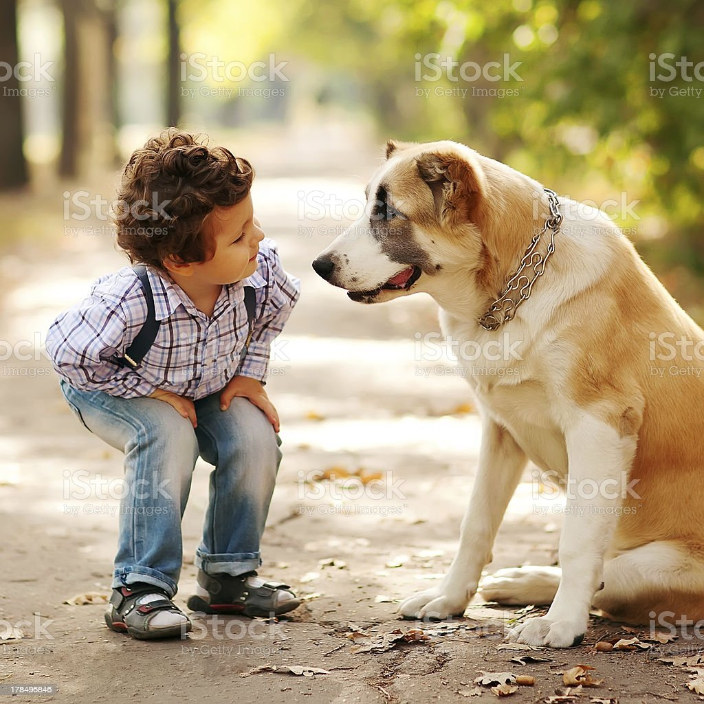 little cute boy playing with his dog stock photo