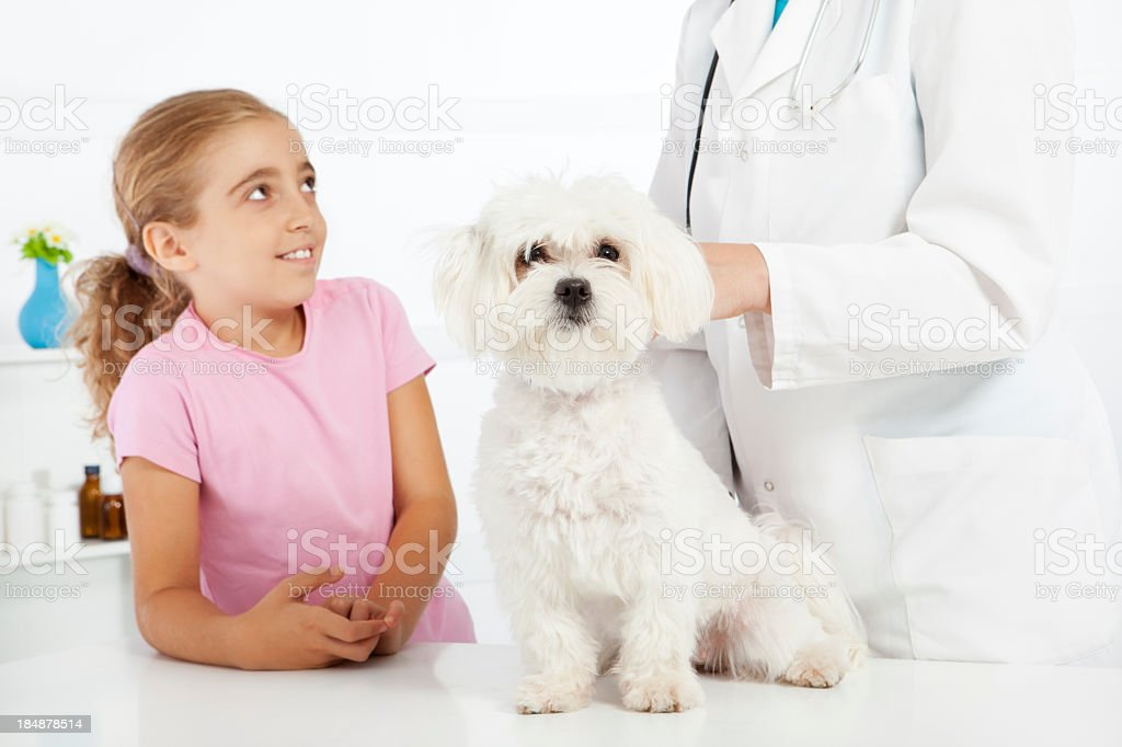 Little Cute Girl with her pet Maltese Dog at Veterinarian royalty-free stock photo