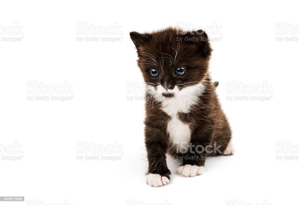 little cute kitten stock photo