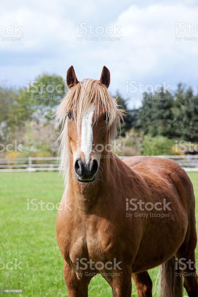 Little cute pony looking with high attention to the camera stock photo