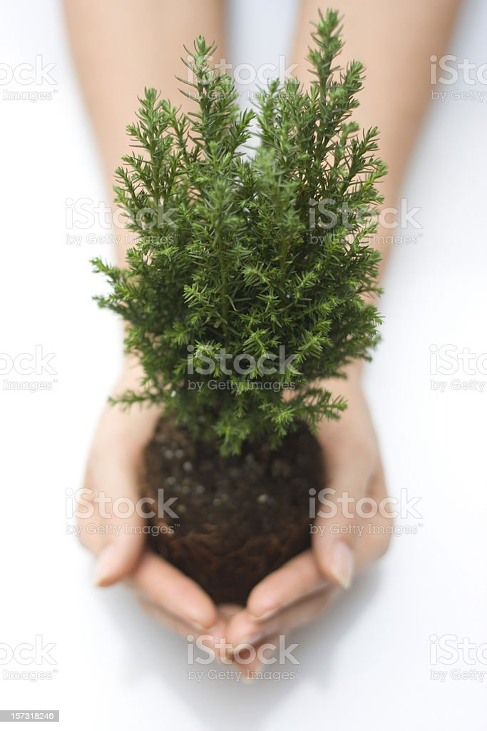 Little cypress in palms stock photo