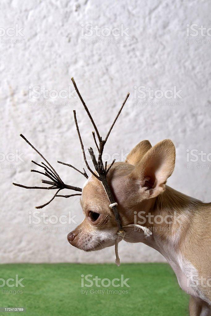 little deer royalty-free stock photo