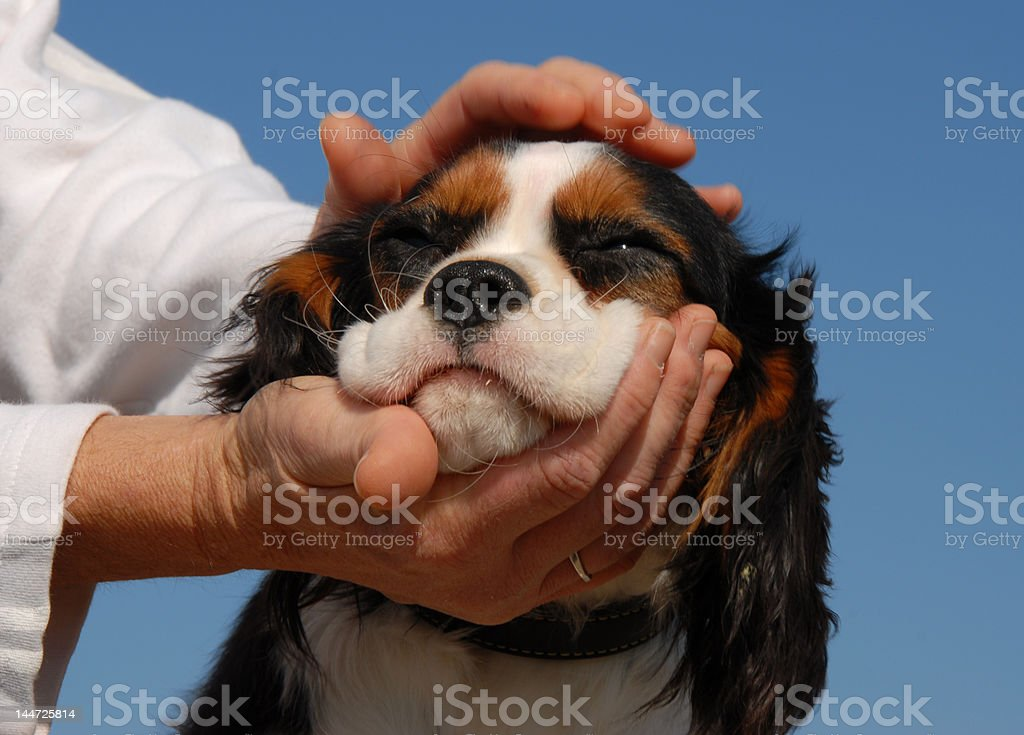 little dog and woman hand's royalty-free stock photo